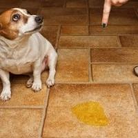 наказание собаки за лужу