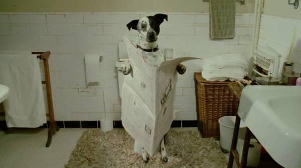 собака на унитазе