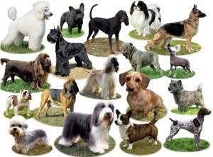 много маленьких собак