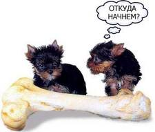 йорки и кость
