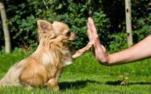 дрессировка щенка