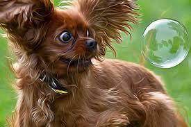 щенок ипугался мылного шара