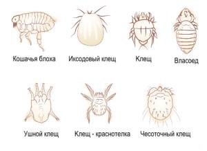 паразиты у собак